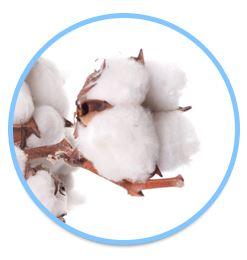 organic_cotton_2.jpg